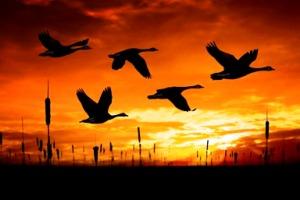 Μεγάλο παχύ πουλί γαμημένο