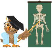 άσκα-ος-κουκουβαγιών-μάθημα-ανατομίας-η-με-έτη-του-ανθρώπινου-σκε-44277510