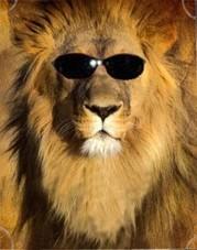 il-vecchio-leone1
