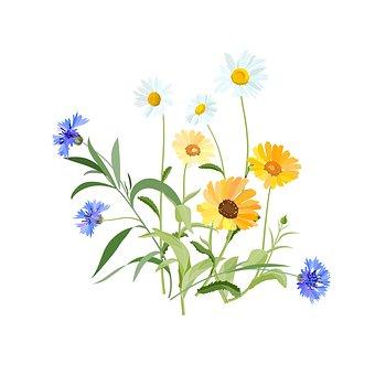 flowers-2082494__340